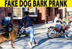 Fake dog Bark Prank